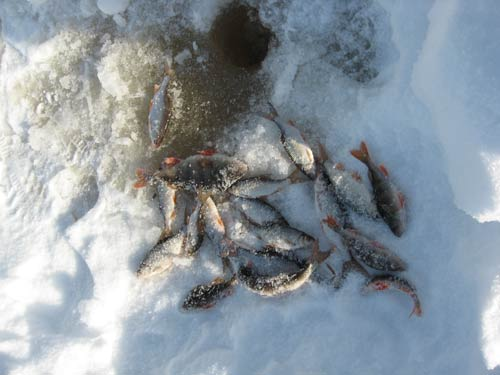 прикормка для чебака зимой из семечек