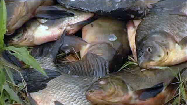 рыба которая клюет вечером